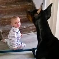baby en dobermann