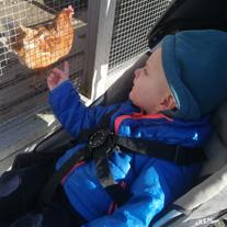 kinderboerderij baby kip
