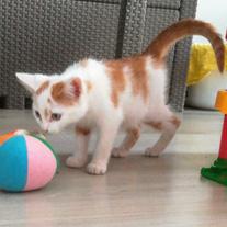 schattige kitten poes