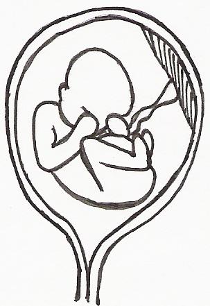 pregnancy week 21