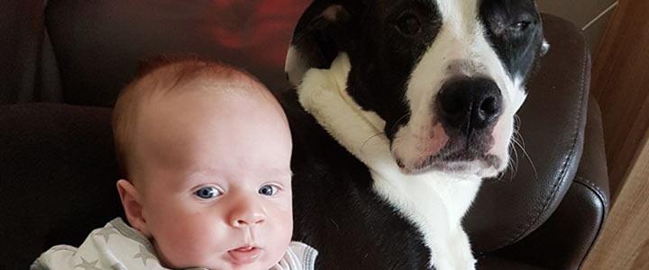 Hond en baby: gaat dat samen?