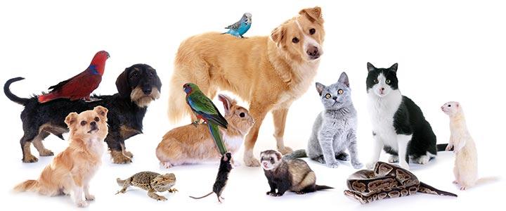 namen voor je hond kat konijn