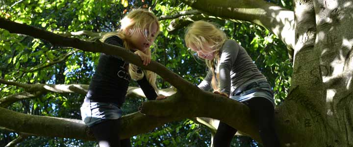 En daar zat de tweeling dan, hoog in de boom