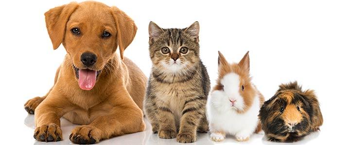 vind een dierennaam voor je (huis)dier. heel veel leuke dierennamen.