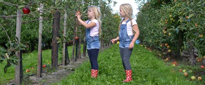 Garantie voor gezelligheid in huis: beroemde appeltaart